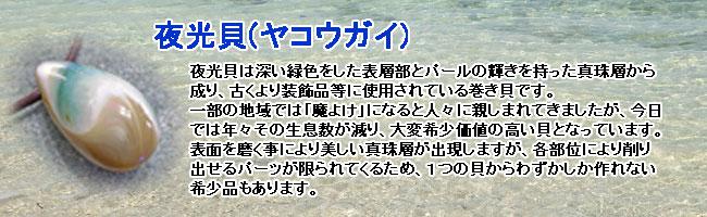 夜光貝(ヤコウガイ)