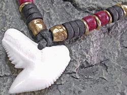 イタチザメ(タイガーシャーク)歯チョーカー