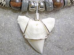 ワンランク上のオシャレ★メジロザメ歯チョーカー