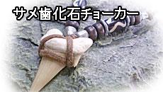 サメ歯化石チョーカー